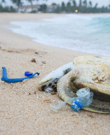 Marine animals are suffering from plastic garbage
